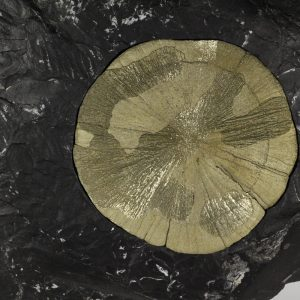 Pyrite Sun on Shale